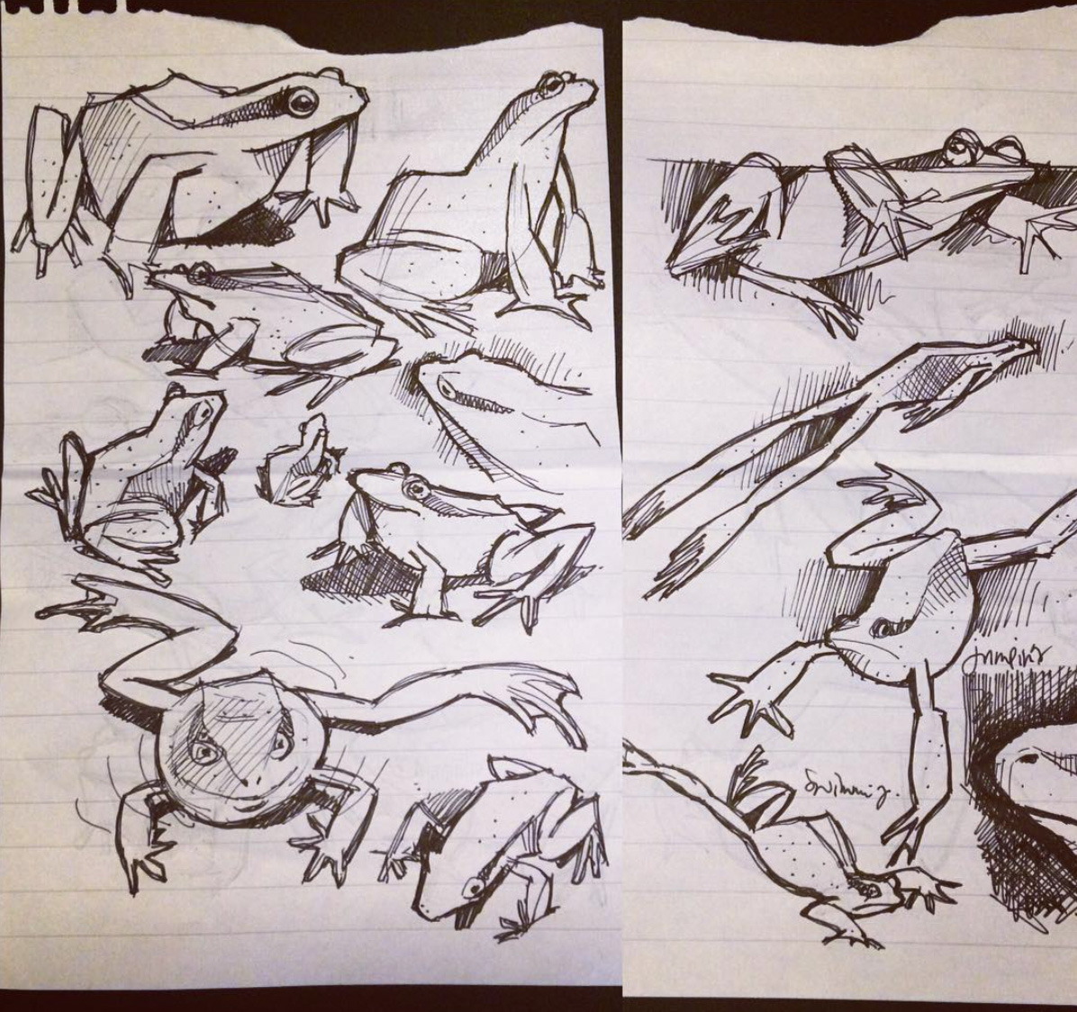 Froggy sketches